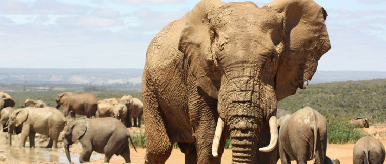 African wildlife in Ivory Coast