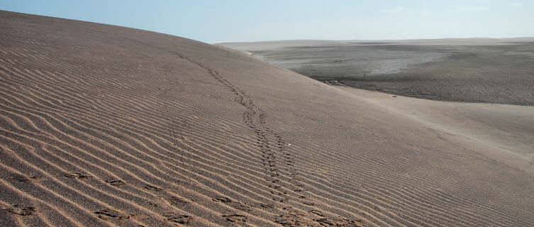 Animal tracks, desert, Angola