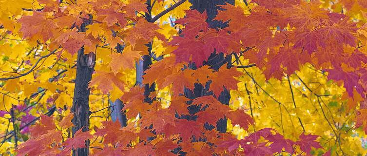 Autumn leaves, Pepper Pike, Ohio, USA