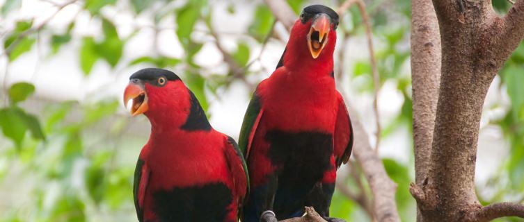 Birdlife in Equatorial Guinea