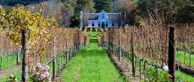 Cape Dutch homestead on a vineyard, South Africa