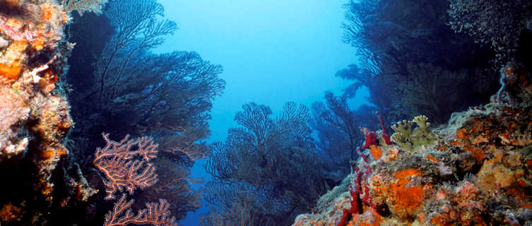 Coral reef at Almond Point Bequia, St Vincent