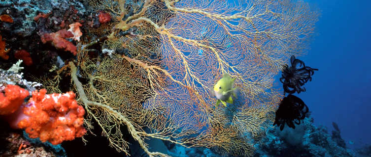 Coral Reef near the Soloman Islands