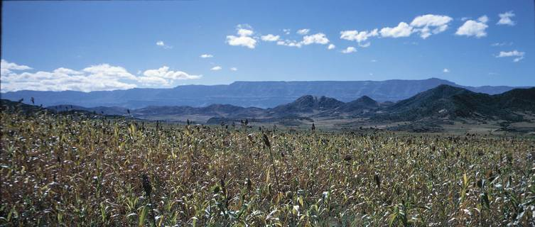 Crop in landscape, Lalibela, Ethiopia