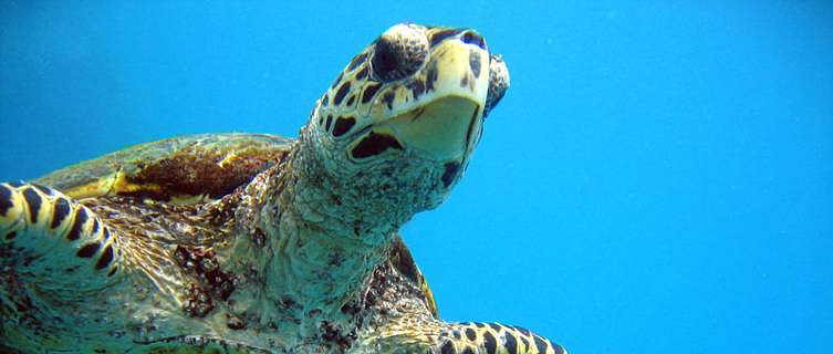 Dive with turtles in the Seychelles