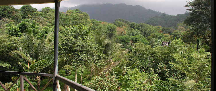 Hike through the island's rainforest