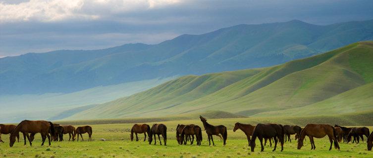 Horse pastures in Kentucky