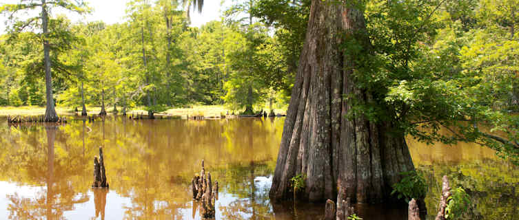 Leory-Percy State Park, Mississippi, USA