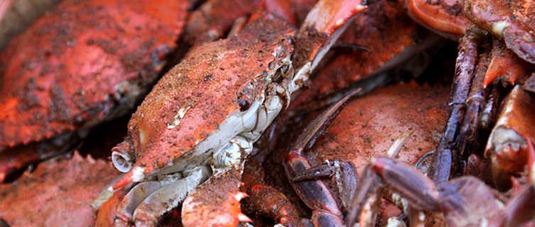 Marlyand Crabs