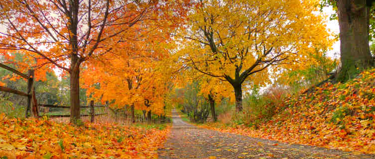 New Jersey in autumn
