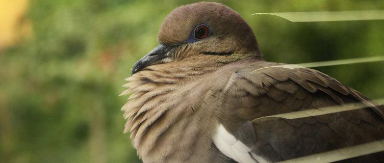 Puerto Rico boasts rich birdlife
