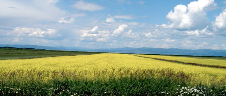 Quebec Fields