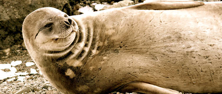 Seal spotting in  Antarctica