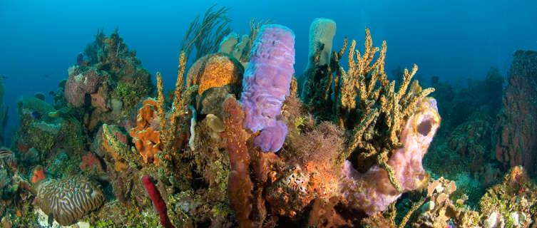 Snorkel in Honduras's coral reefs