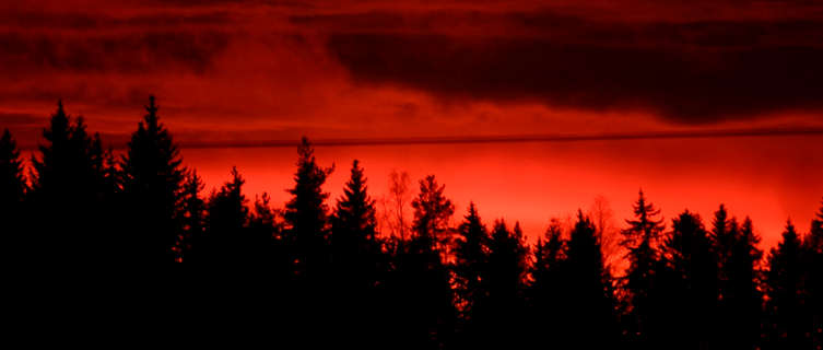 Sunset over a Lapland Forest, Finland