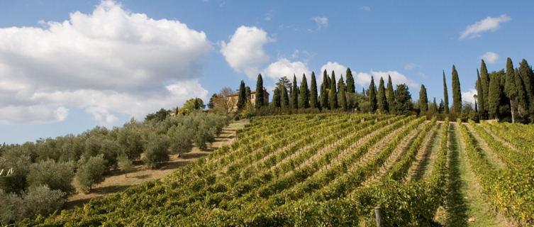 Tuscan vineyard
