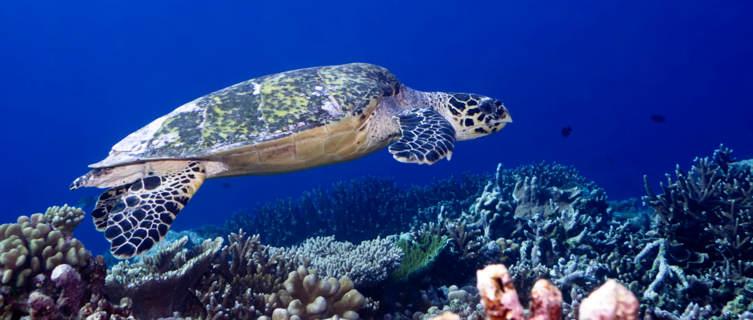 Underwater world, Maldives