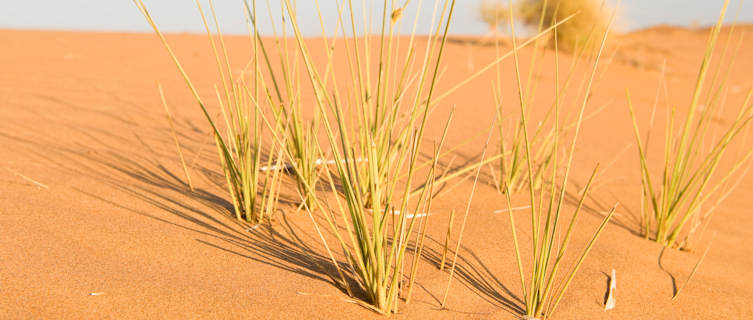 Wahiba Desert, Oman