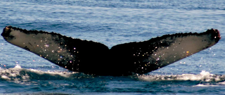 Whale watching, Bar Harbour, Maine