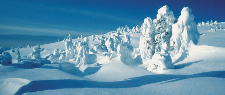 Yellowstone National Park, a Winter Wonderland
