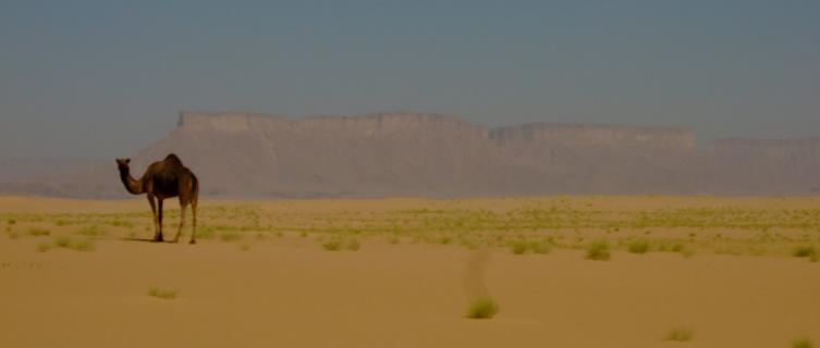 Yemen desert
